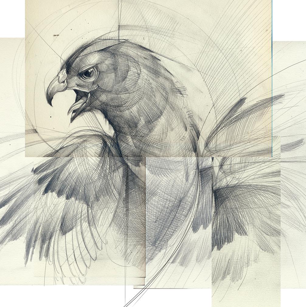 phoenix web